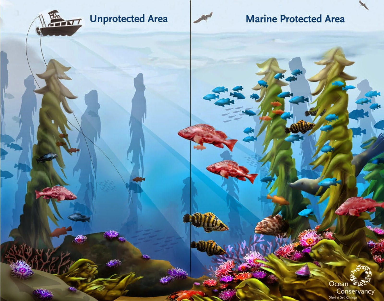 Why marine protected areas are important