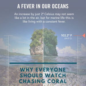 cover-blog-about-chasing-coral-gili-shark-conservation-project