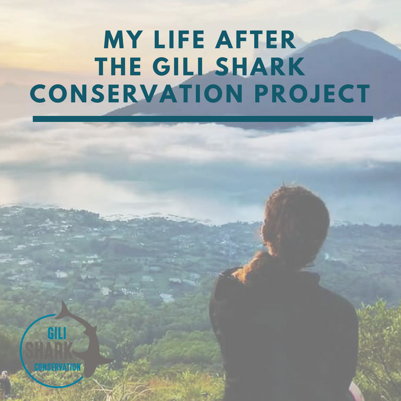 image-blog-addie-my-life-after-gili-shark-conservation