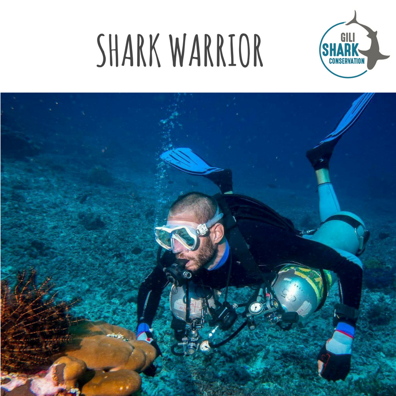 Warriors Of The Dawn 2017 Sub Indo: Meet The Shark Warriors That Contribute To Our Shark