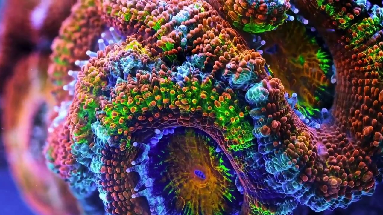 coral-time-lapse-project