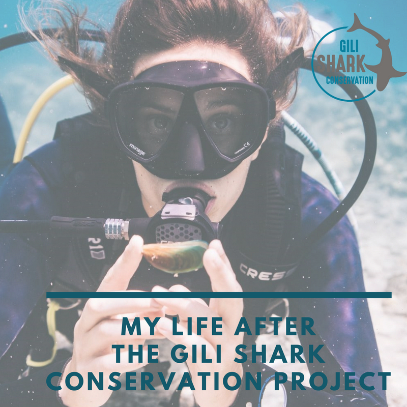 cover-blog-my-life-after-the-gili-shark-conservation-project-by-taylor