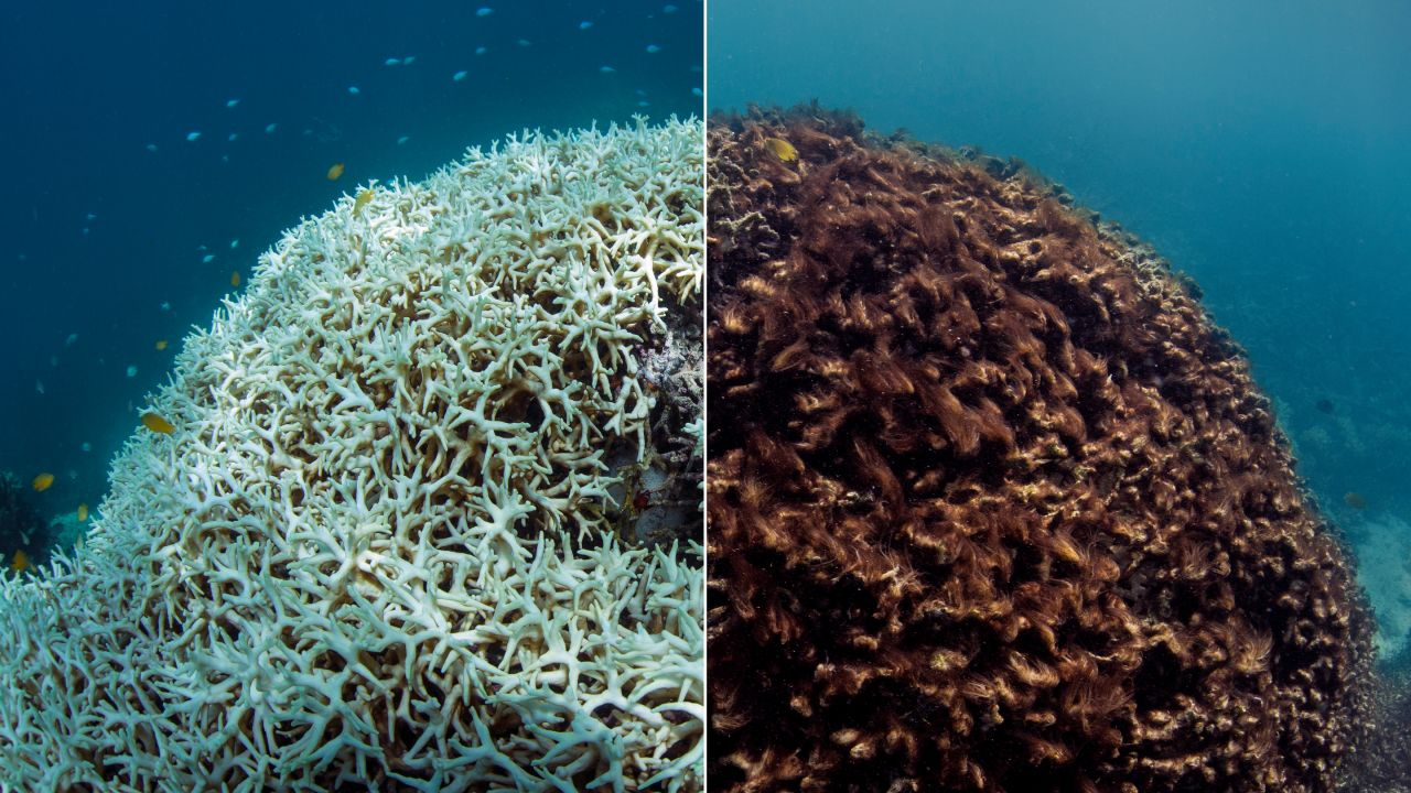 example-time-lapse-coral-bleaching