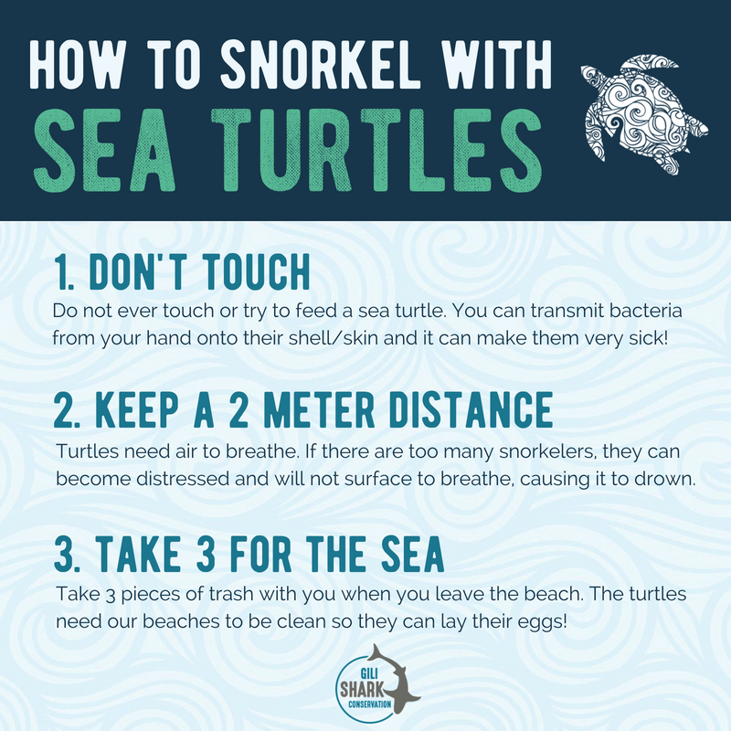 how-to-snorkel-with-sea-turtles