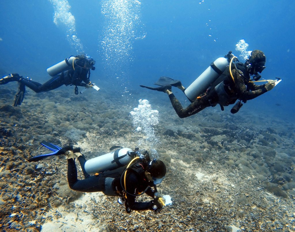 survey-dive-research-team-gili-shark-conservation-project-gili-air