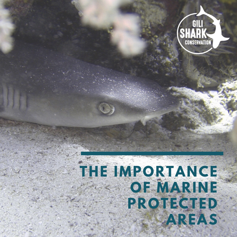 the-importance-of-marine-protected-areas
