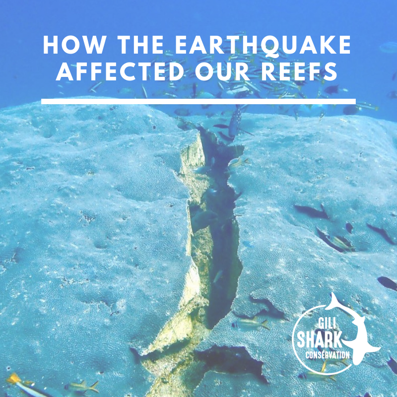 how-the-earthquake-affected-the-reefs-of-the-gili-islands