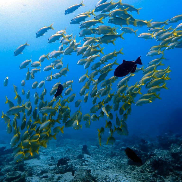 school-of-fish-around-the-gili-islands