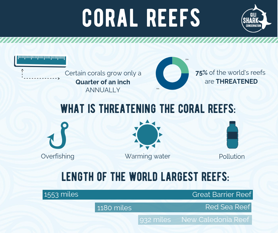 Infographic about Coral Reefs