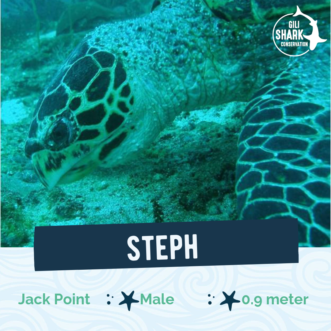 Hawksbill turtle - Gili Islands - Turtle ID Project