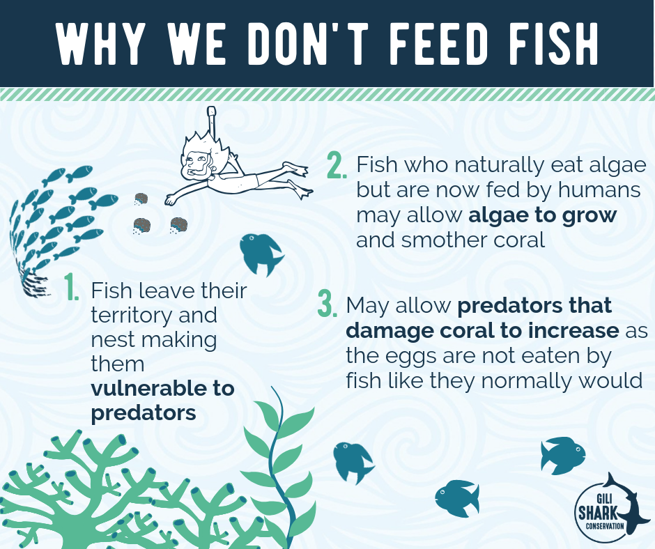 Infographic why you shouldn't feed fish.