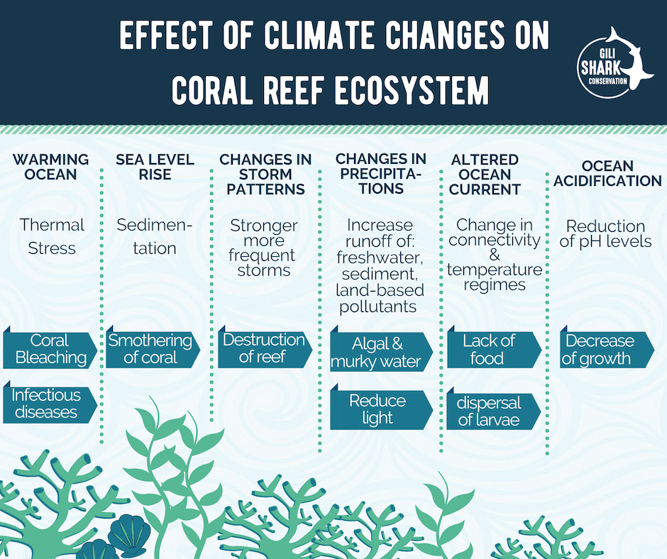 Effect Of Climate Changes On Coral Reef Ecosystem