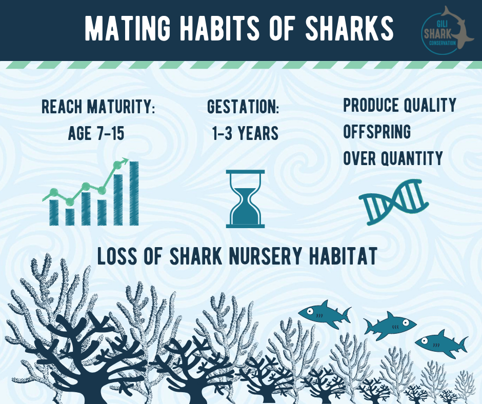 Mating Habits Of Sharks