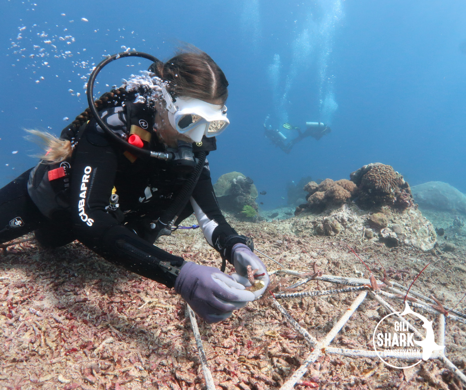 The Shark Warrior Family went on a research trip to Nusa Lembongan to learn about Coral Restoration