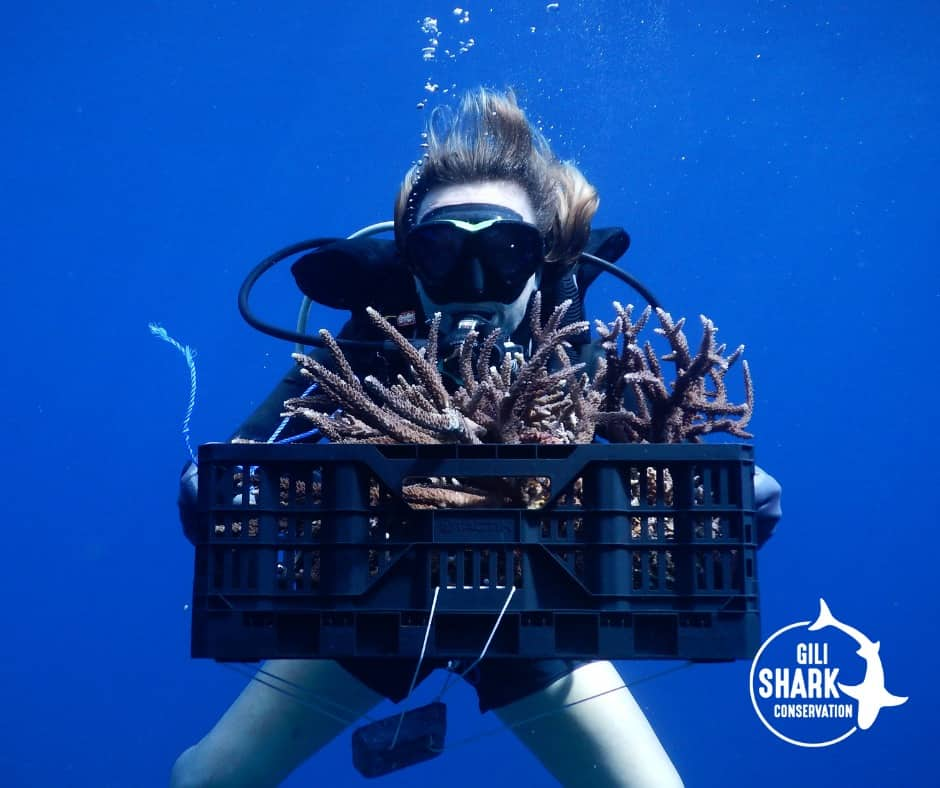 Coral Restoration Project On The Gili Islands