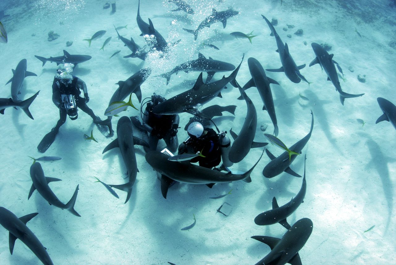 sharks-surrounding-divers