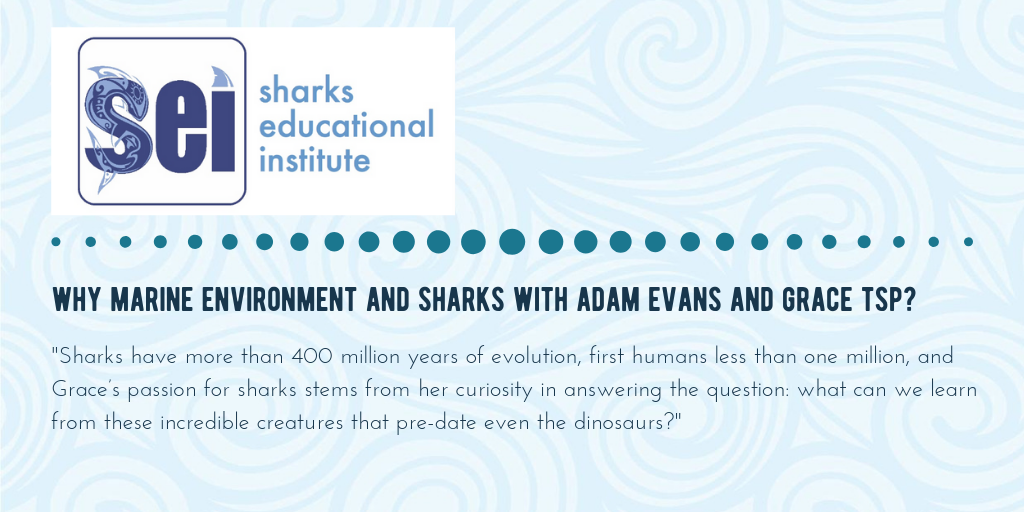 Sharks Educational Institute - Gili Shark Conservation Project