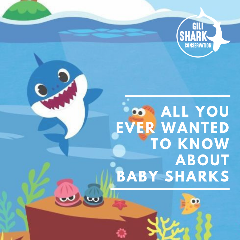 Cover Blog all You Ever Wanted To Know About Baby Sharks And Shark Reproduction