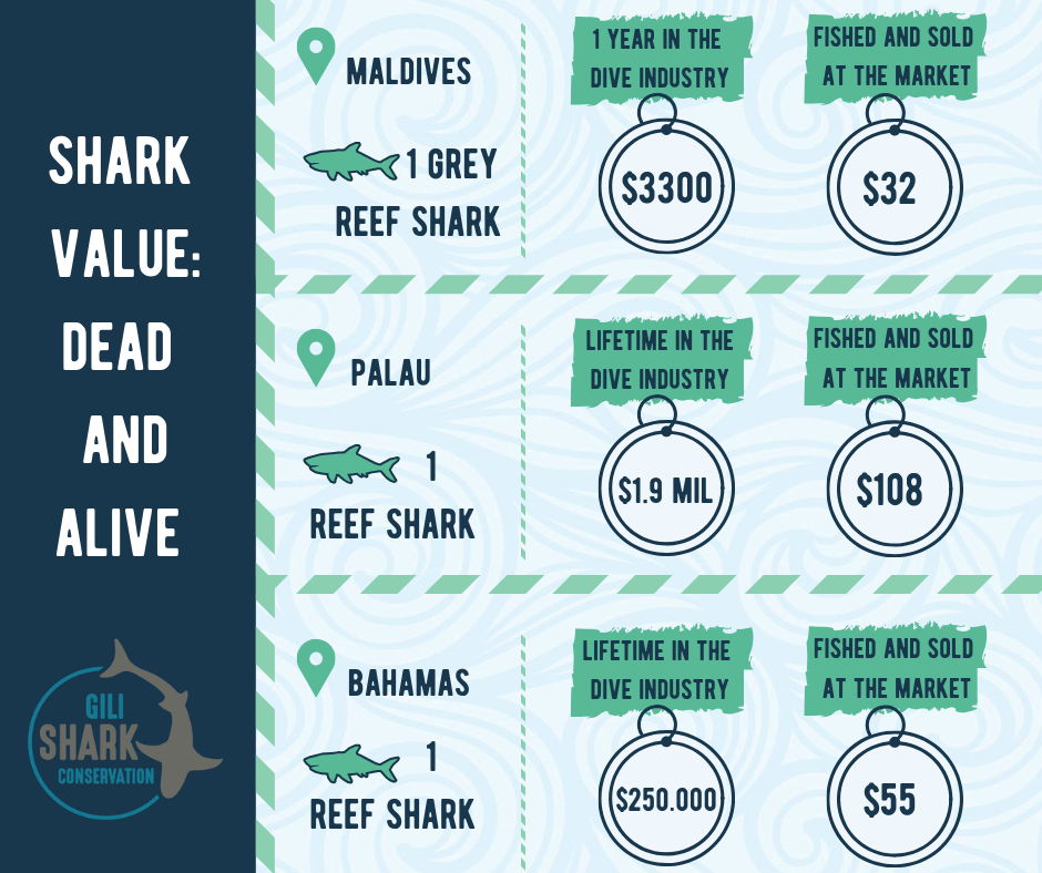 The value of dead shark and a shark who is alive