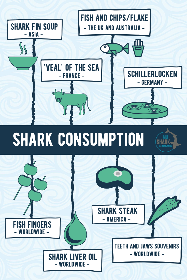 Info graphic shark consumption