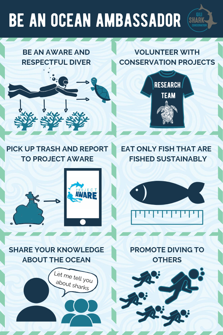 How to be an ambassador of the ocean