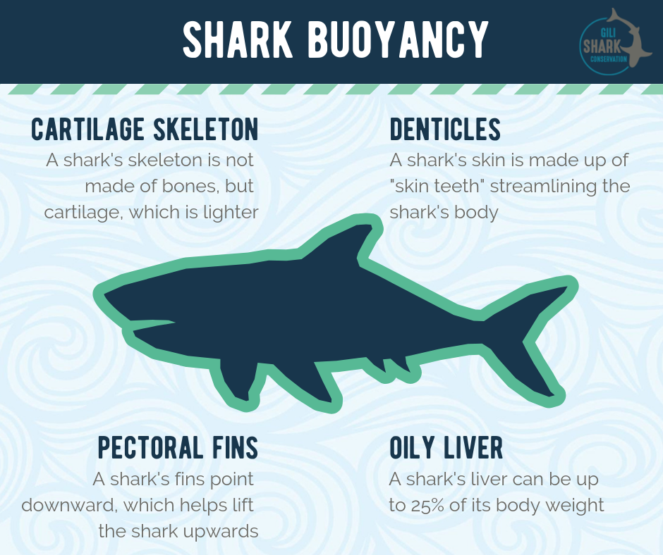 Shark Buoyancy