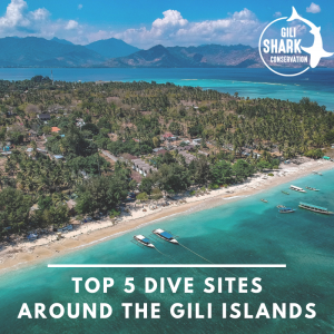 Cover blog - top 5 dive sites around the Gili Islands
