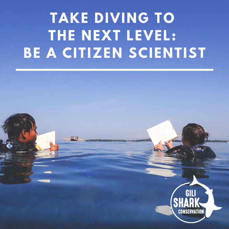 Take Diving To The Next Level - Become a Citizen Scientist