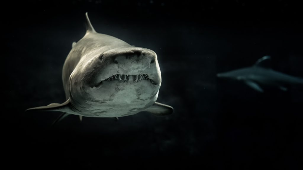 Sand tiger sharks have a mouth full of teeth that stick out in every direction, even when their mouths are shut. Despite their aggressive appearance, they're docile.