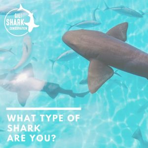 quiz what type of shark are you?