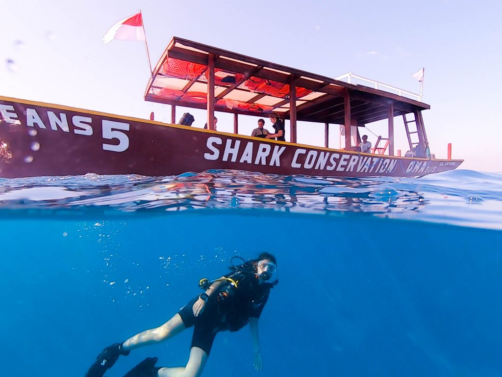 If you want to become a Divemaster and join us on our shark conservation boat, just apply online!
