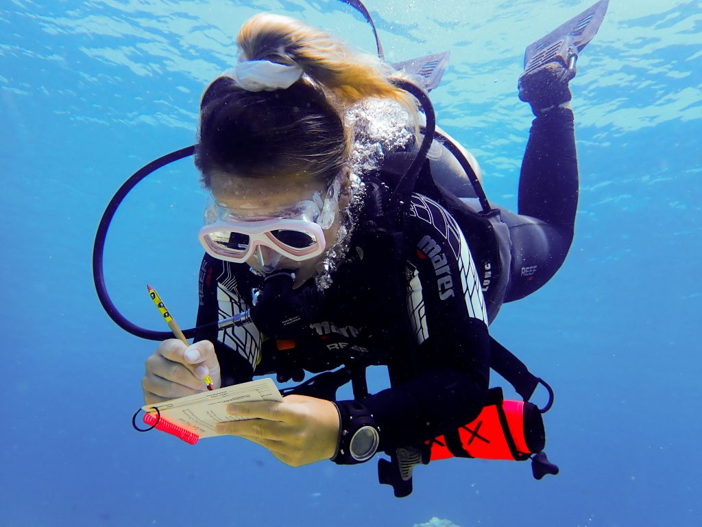While you're doing your Divemaster internship, you'll join our research team and do scientific dives and data entry.