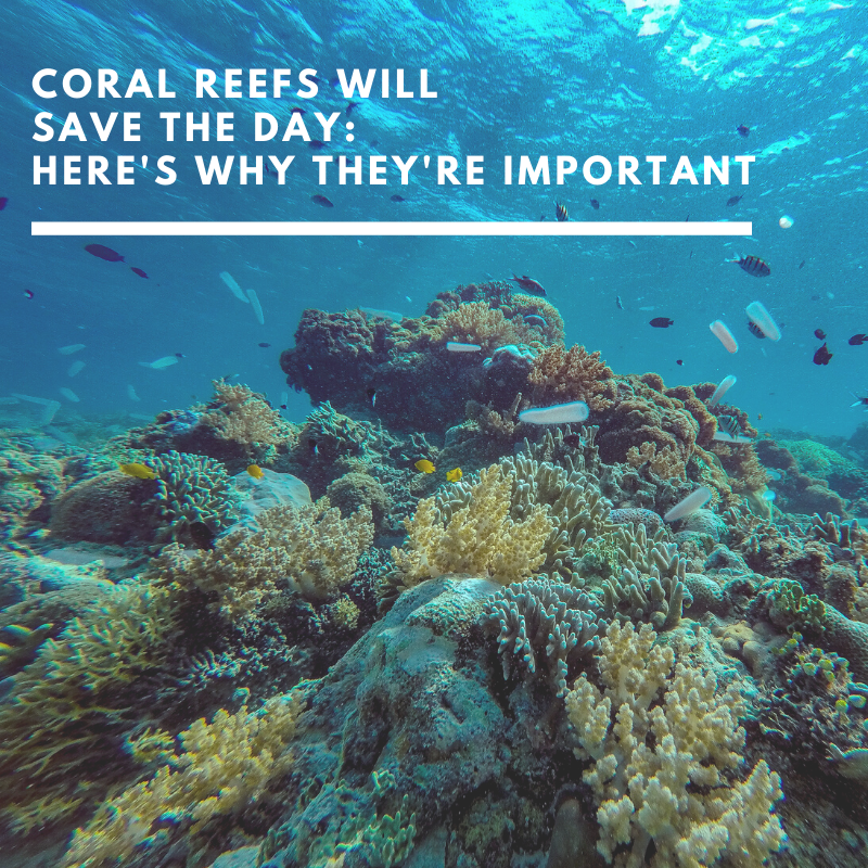 Coral reefs will save the day. Here is why they are important.