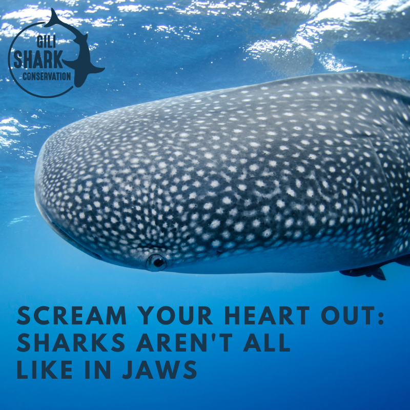 A blog about why not all sharks are scary