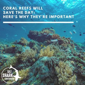 Cover blog - coral reefs will save the day