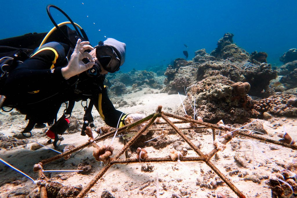 One thing you can do to help protect coral reefs is coral restoration. Sharkie Richard is planting some coral baby fragments here!