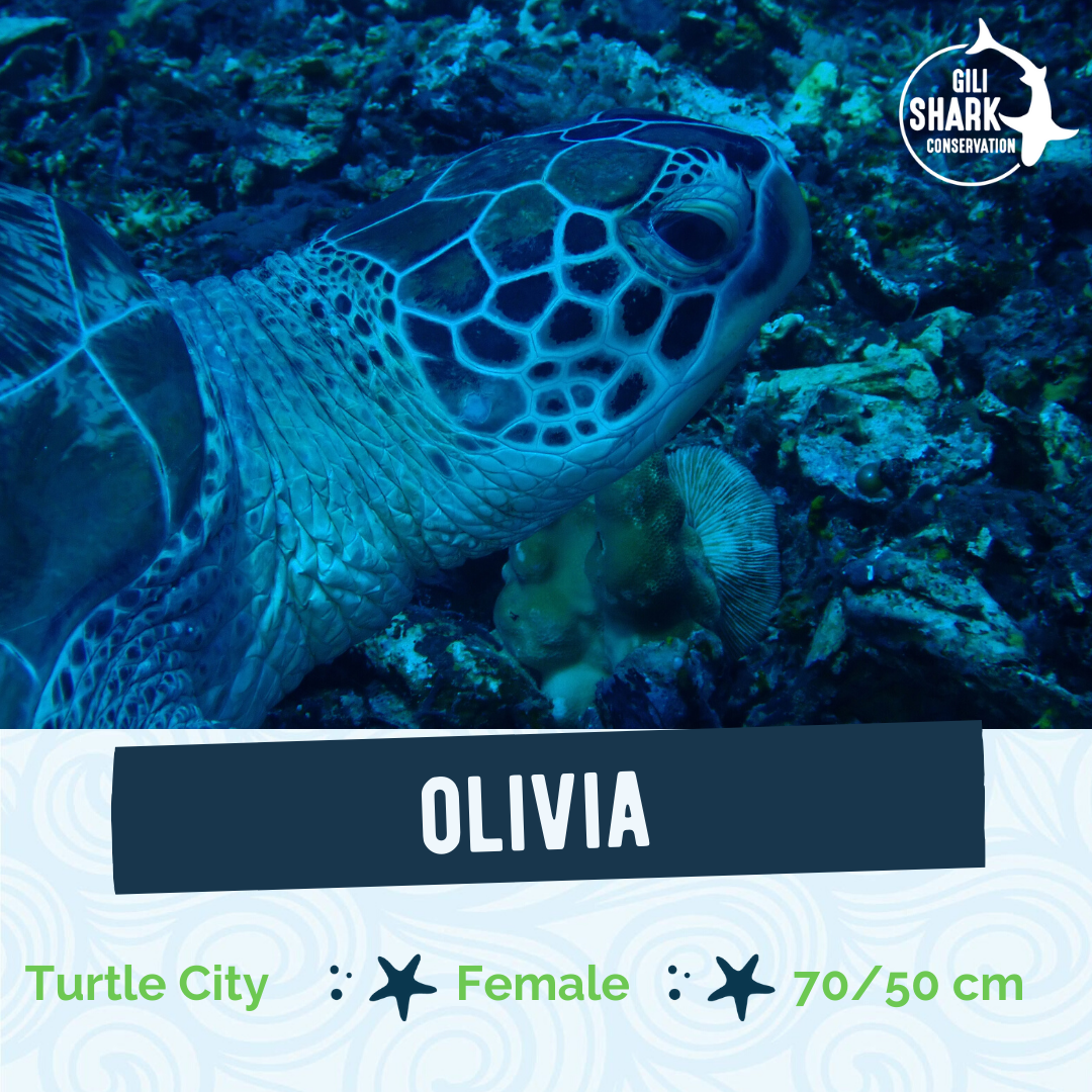 Turtle ID Project - Gili Islands - Indonesia