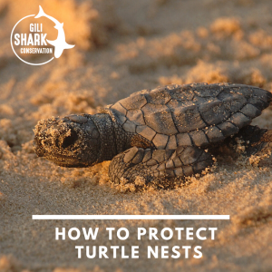 The Most Frequently Asked Questions ABout Turtle Nests